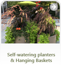 Self-watering planters & Hanging Baskets